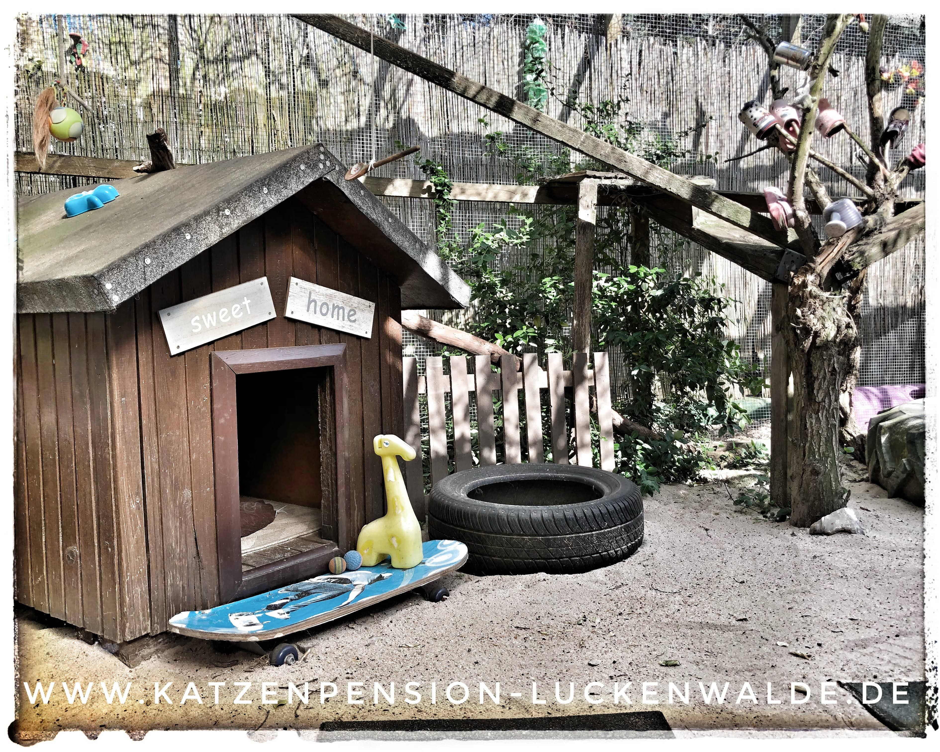 ####h1### - IMG 9506 min - Katzenpension - Tierpension - Tierbetreuung