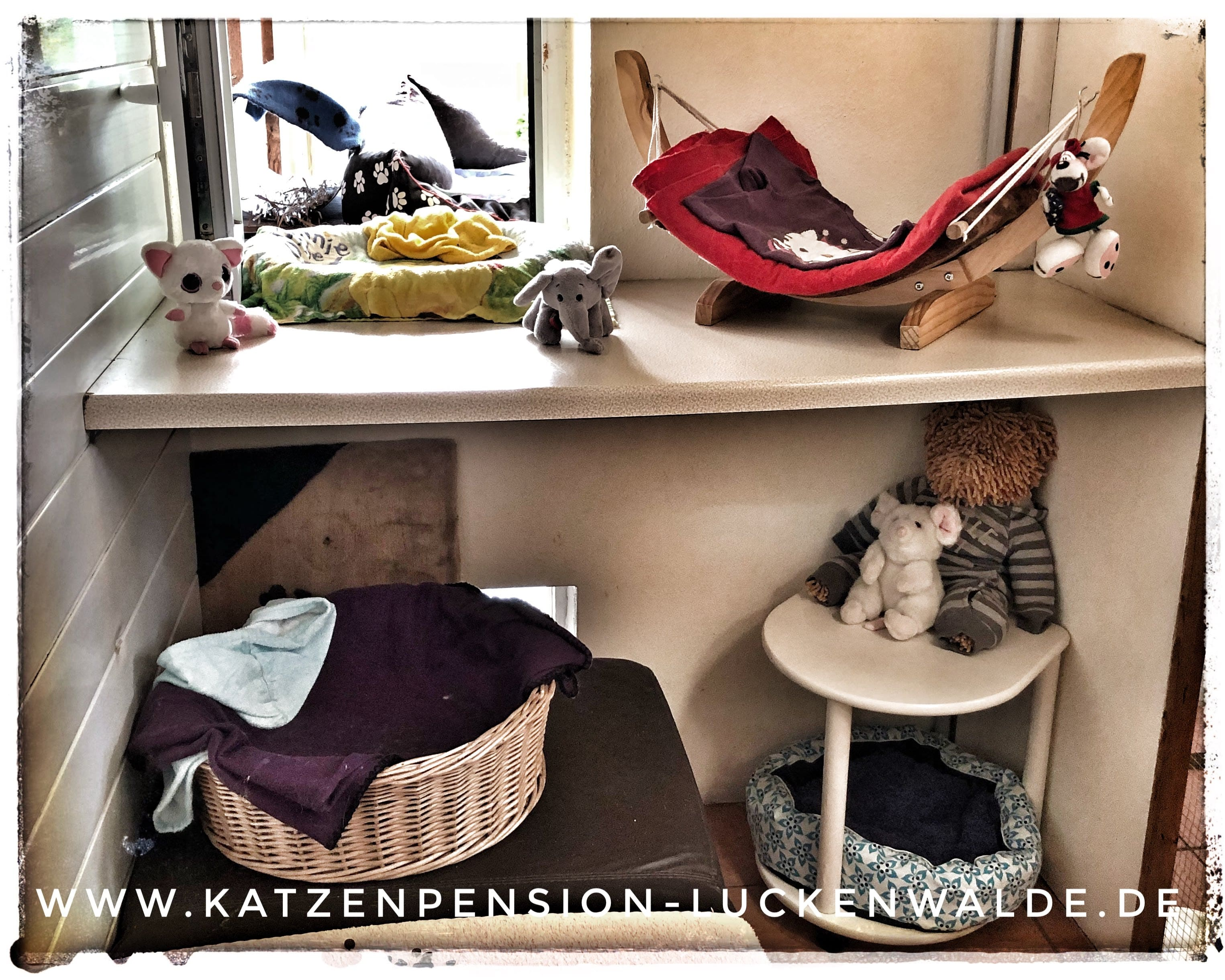 ####h1### - IMG 9522 min - Katzenpension - Tierpension - Tierbetreuung