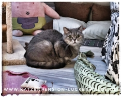 ####h1### - IMG 6208 min - Katzenpension - Tierpension - Tierbetreuung