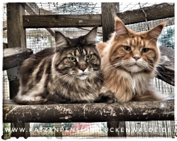 ####h1### - IMG 6597 min - Katzenpension - Tierpension - Tierbetreuung