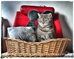 ####h1### - IMG 7643 min - Katzenpension - Tierpension - Tierbetreuung