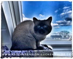 ####h1### - IMG 7651 min - Katzenpension - Tierpension - Tierbetreuung