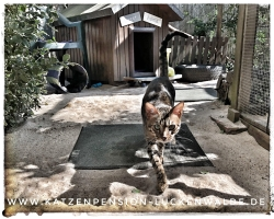 ####h1### - IMG 8809 min - Katzenpension - Tierpension - Tierbetreuung